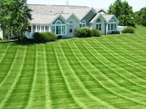 lawn stripes LR